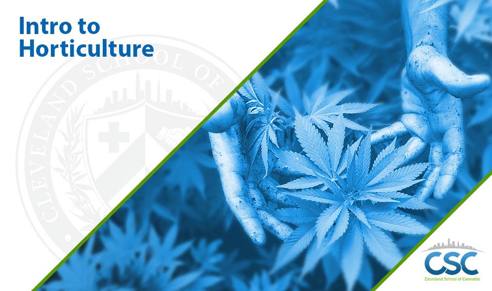 Cannabis Business Certification Program
